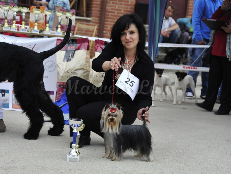 Azahar de Marvels Lux - Reserva Best in Show