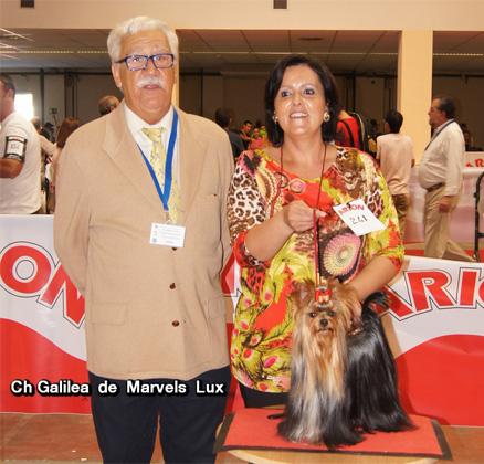 Ch Galilea de Marvels Lux hace CAC CACIB Mejor Sexo Opuesto en la Exposicion Internacional de Ciudad Real Juez Don Angel Sotoca
