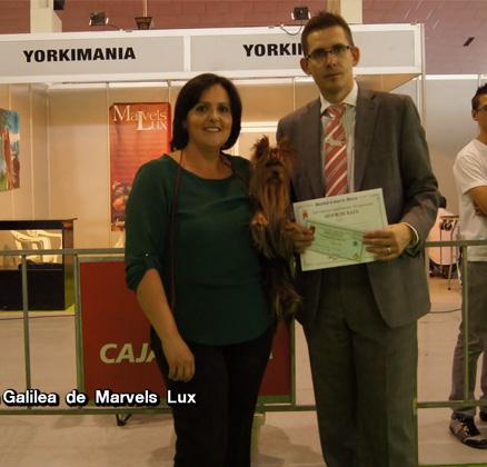 Galilea de Marvels Lux consigue su tercer CACIB y se proclama Mejor Ejemplar de Raza en la XX Exposicion Internacional de la Region de Murcia Juez Mr. Robert Kanás de Eslovaquia