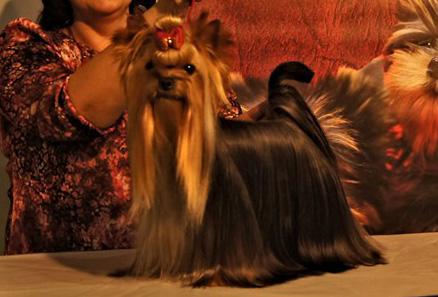 Alma de Marvels Lux se proclama Mejor Ejemplar de Raza en la XXIX Exposicion Nacional de la Region de Murcia Jueza Paloma Inglesias