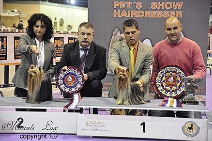 Best in Show Especializada de Sapin 2010