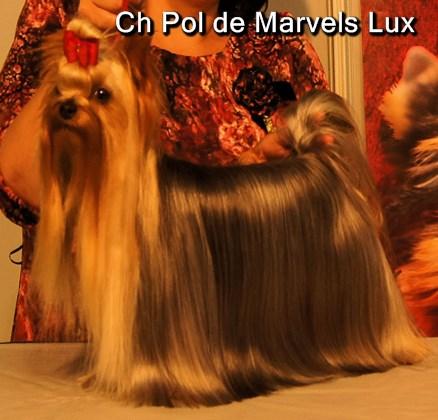 Ch Pol de Marvels Lux Excelente 1º en la XXIX Exposicion Nacional de la Region de Murcia Jueza Paloma Inglesias