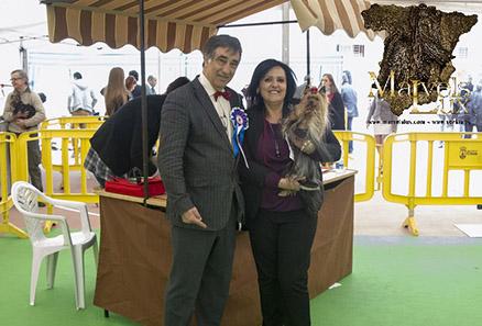 Nueva Campeona Club Español del Yorkshire Terrier