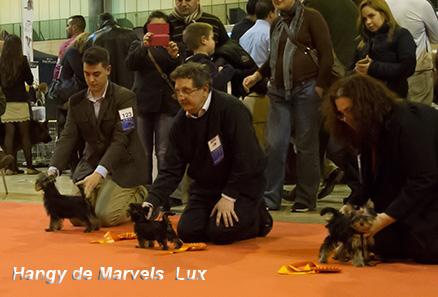 Hangy de Marvels Lux