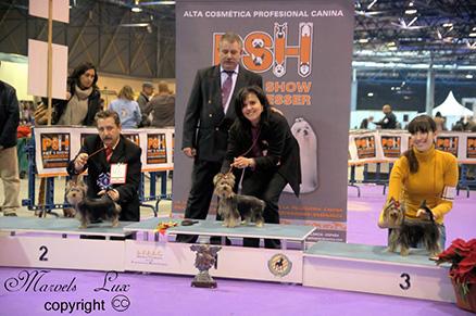 Mejores cachorros Azahar y Riddick de Marvels Lux en la  Especializada de Sapin 2010